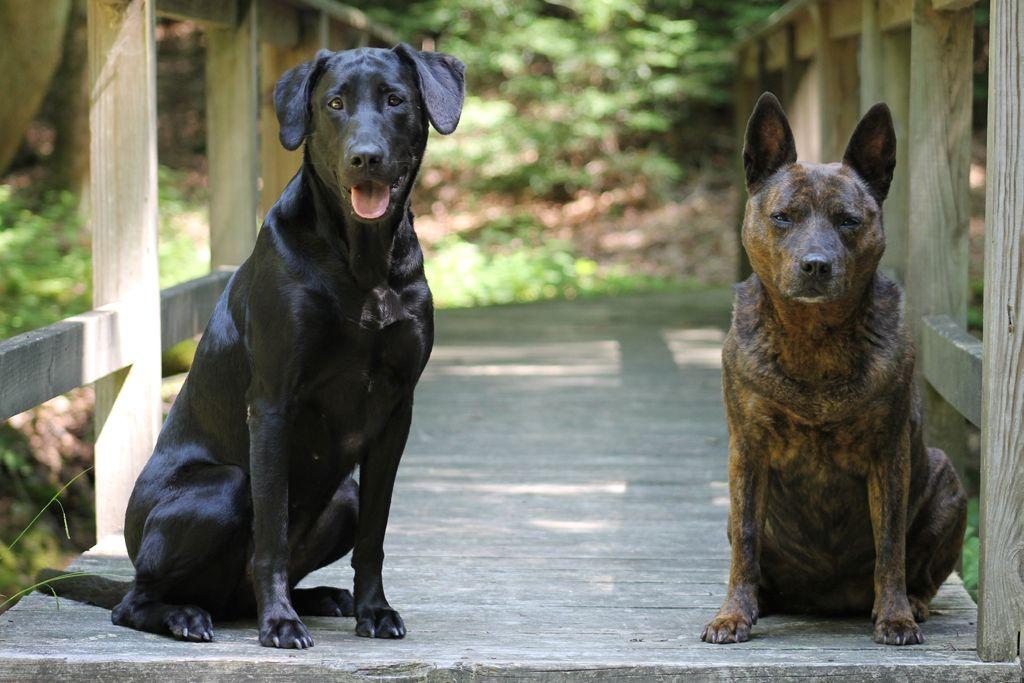 Patrick's dog's – Jet & Lucy at Cabin Bridge
